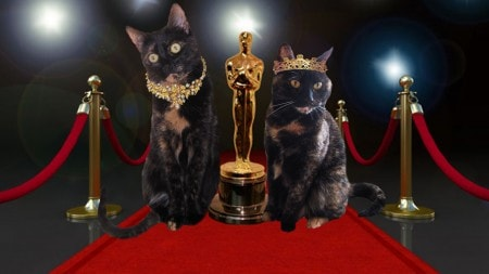 cats at the Academy Awards Oscars