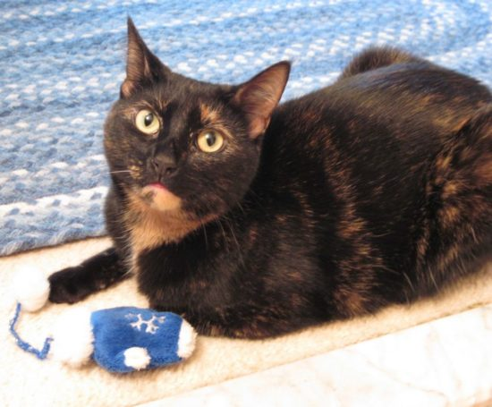 tortoiseshell-cat-catnip-toy