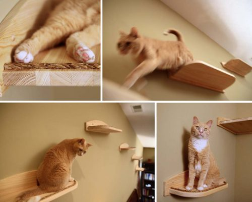 cat-shelves-climbers