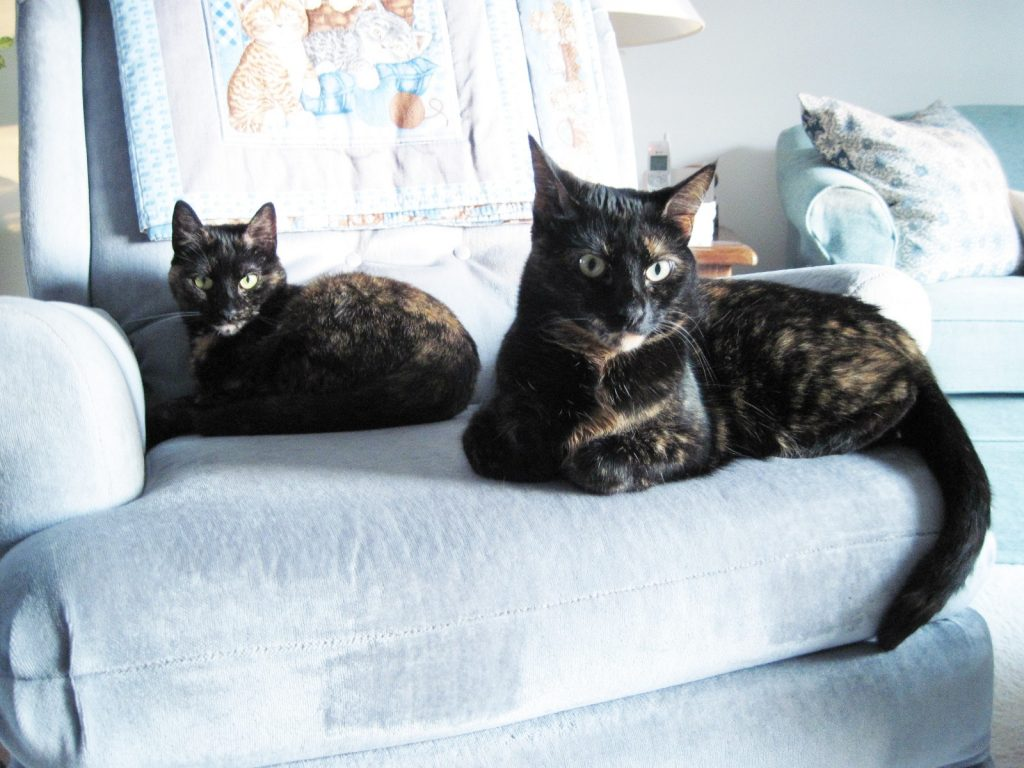 Tortitude The Unique Personality Of Tortoiseshell Cats - 18 hilarious sad cat problems that might explain why your cats so moody