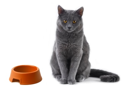 The Best Food For Your Cat My Recommendations