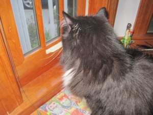 Musetta birdwatching