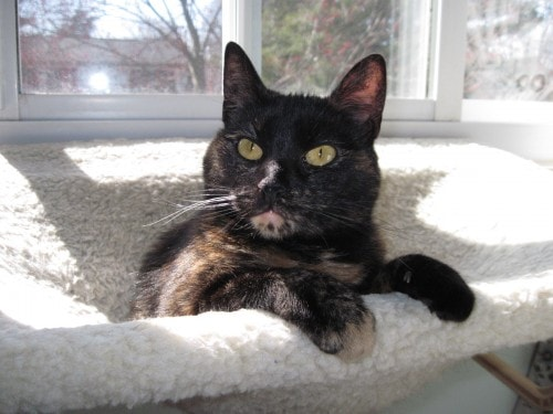 cat_window_perch
