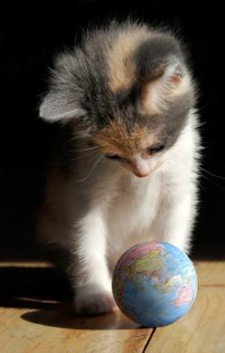 cat_with_globe