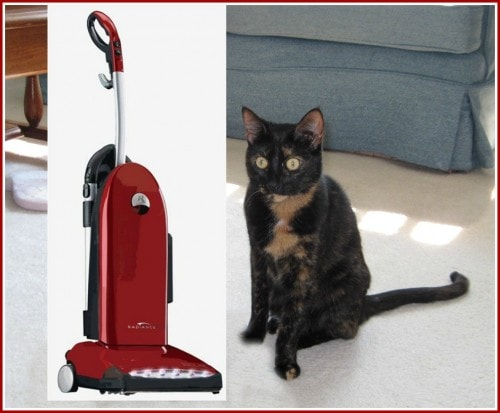 cat_with_vacuum cleaner