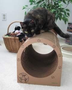 Ruby_catpod_cat_scratcher_furniture