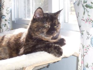 senior_cat_on_window_perch