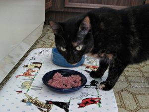 Pawgevity_raw_rabbit_cat_food