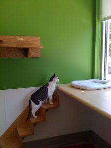 Harmony_House_for_Cats_Net_Zero_Energy_shelter