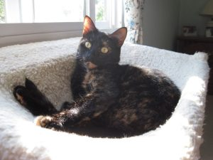 Allegra_tortoiseshell_cat_at_window
