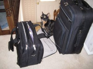 cat_with_ suitcase