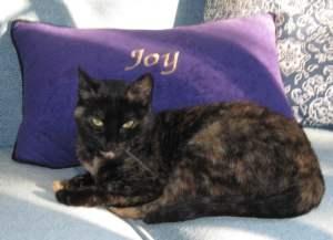cat_joy_pillow_cute