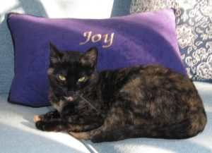 cat_joy_pillow_cute
