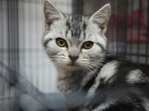 cat_in_cage