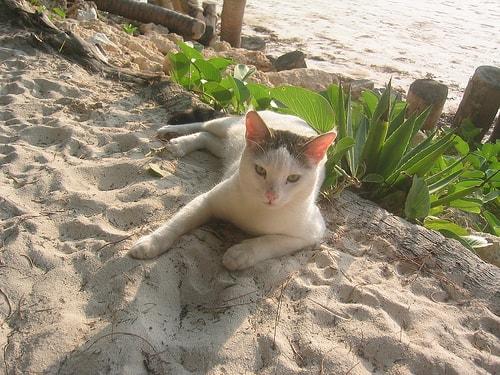 cat_on_beach
