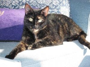 cat_on_sunny_sofa