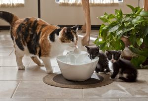 Drinkwell_Lotus_Pet_Fountain
