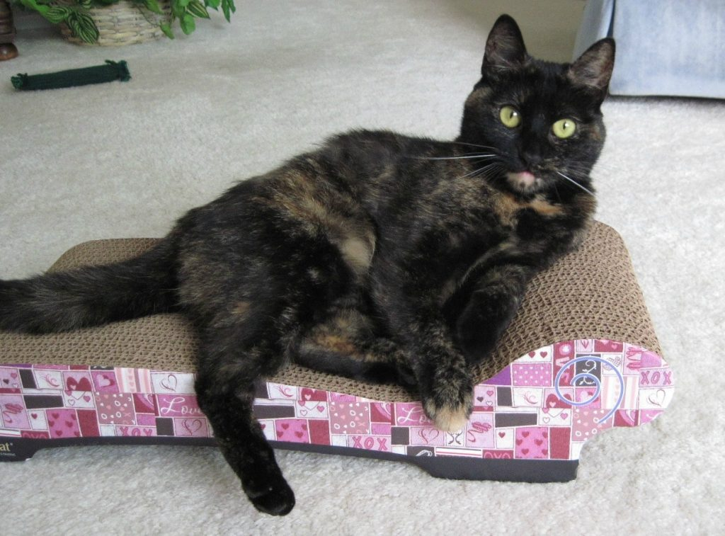 Imperial cat scratch n shapes sofa scratcher chaise winner for Chaise lounge cat scratcher