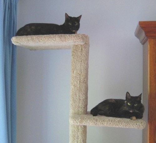 cat_superhighway