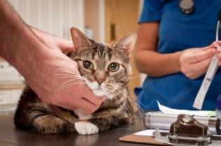cat_at_vet_exam