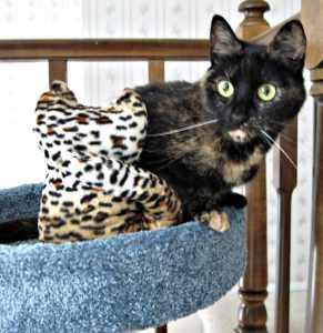 Cat_Buddy_Lola_Spirit_Essences
