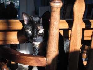 tortoiseshell_cat_chair
