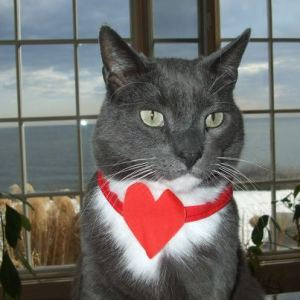 grey_cat_valentine