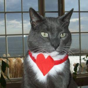 grey_cat_valentine