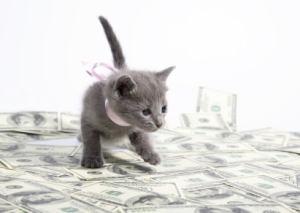 kitten_with_money