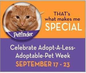 Less_Adoptable_Pet_Week