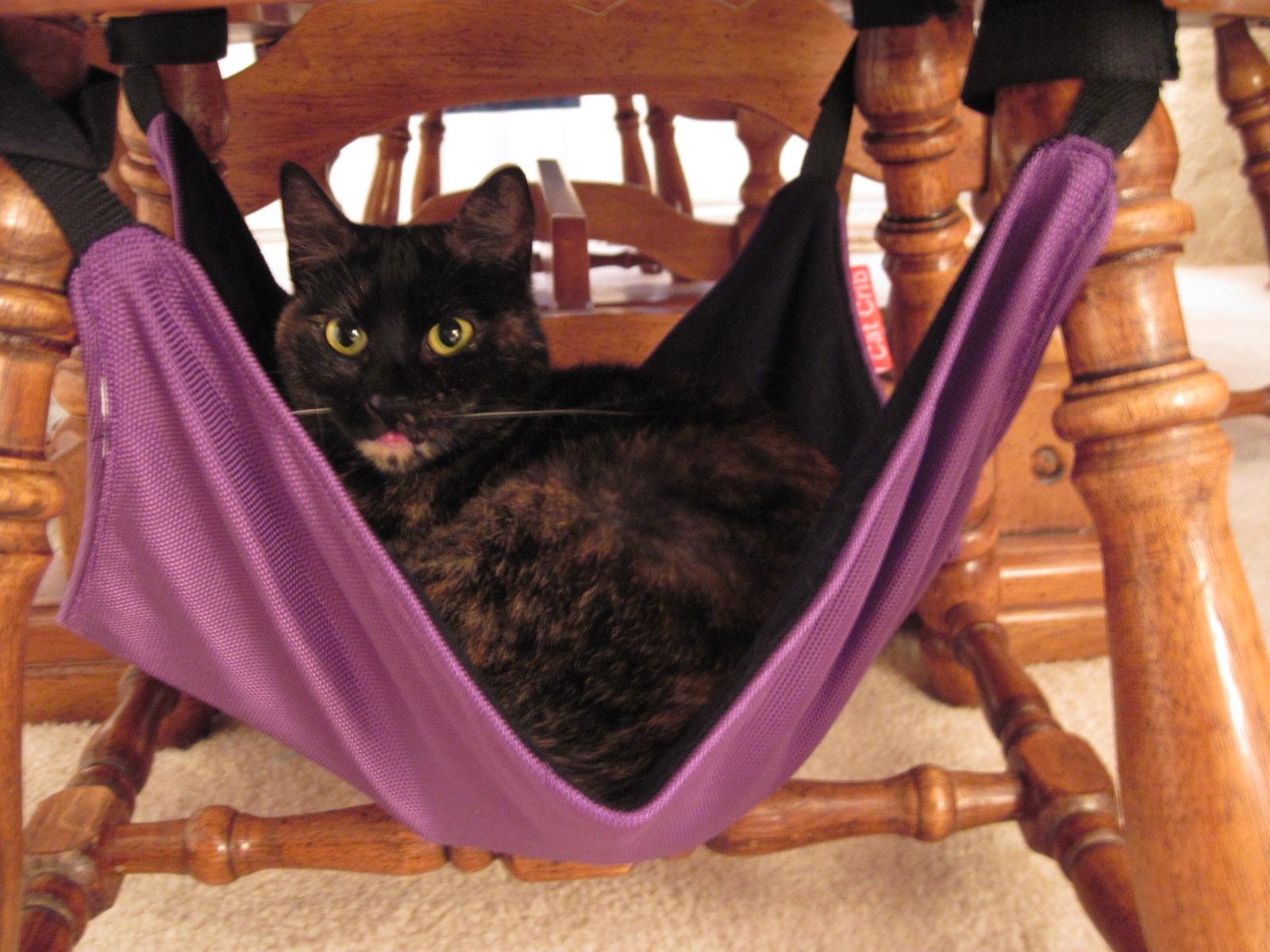 cat crib cat hammock winners  rh   consciouscat
