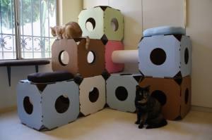 Cattystacks