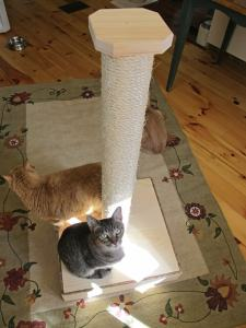 vertical_cat_scratcher