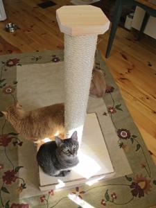vertical_cat_scratcher