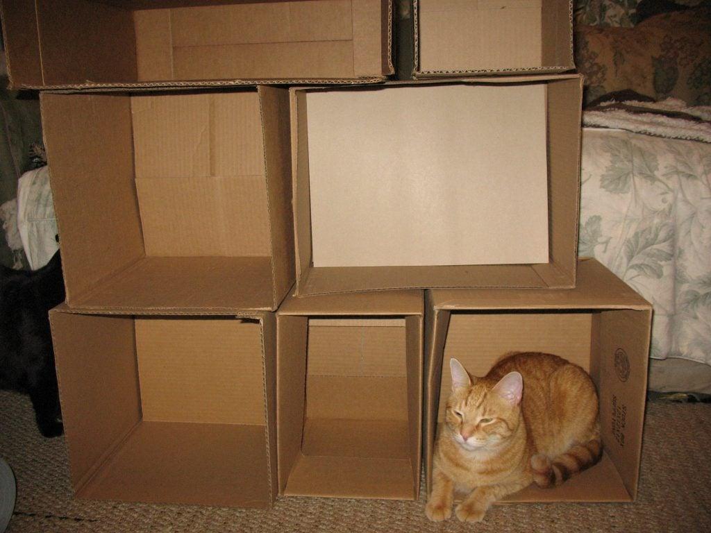 Diy custom cat climbing wall for Diy cat tower cardboard