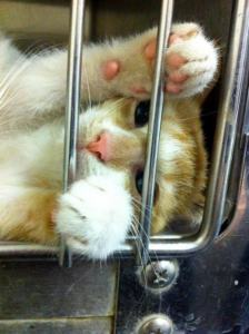 cat in shelter cage