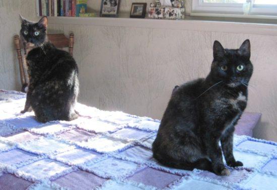 cat-zoomies