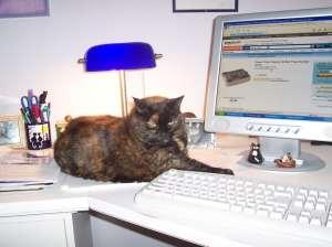 cat_on_desk