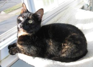 cat_on_window_perch