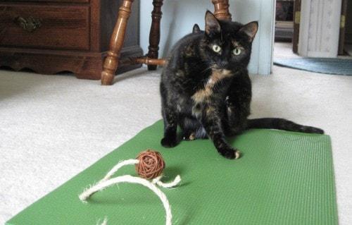 feline_yoga_pose