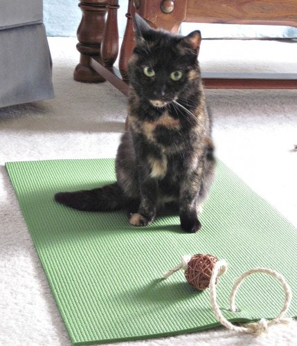 cat_yoga_mat