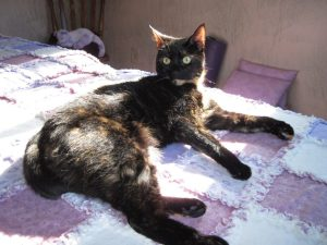 cat_on_massage_table