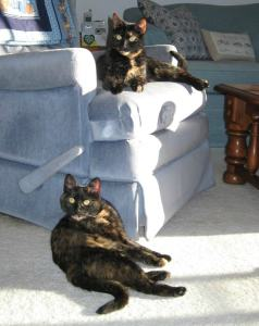 cats_on_chair