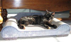 Cat_cardboard_scratcher