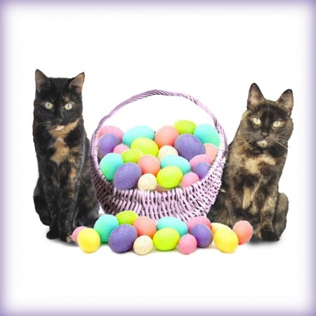 cats_with_Easter_basket
