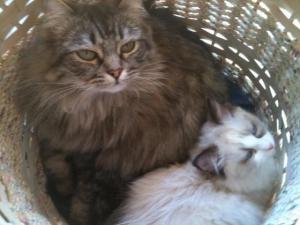 Leann_Sweeney's_cats