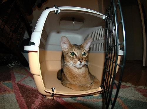 emergency_preparedness_for_cats