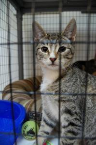 shelter_cat
