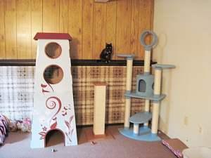 Refined_Feline_Catemporary_Castle_Review