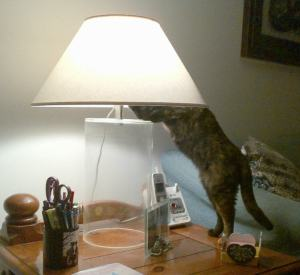 cat_with_lamp